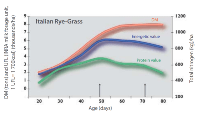 graphic representing the Evolution of quantity of dry matter vs. protein and energy value of Italian ryegrass
