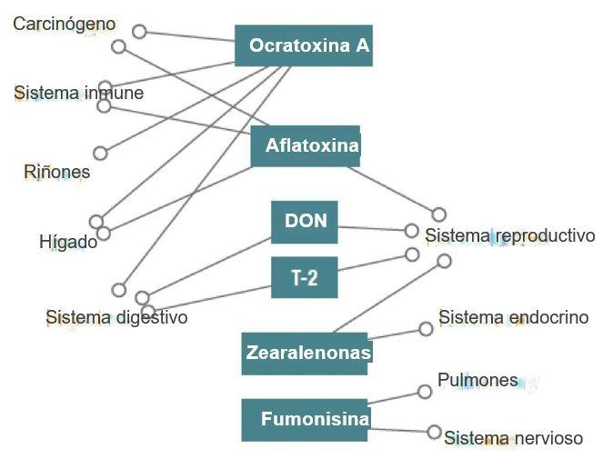 Resumen de los principales efectos sobre la salud de las micotoxinas observadas con mayor frecuencia (adaptado de Gabler, 2015)